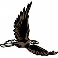 Disegno di Aquila in Volo a colori