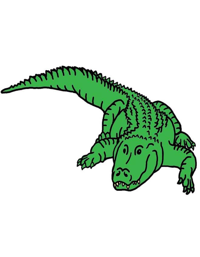 Disegno di il coccodrillo a colori per bambini for Coccodrillo da colorare