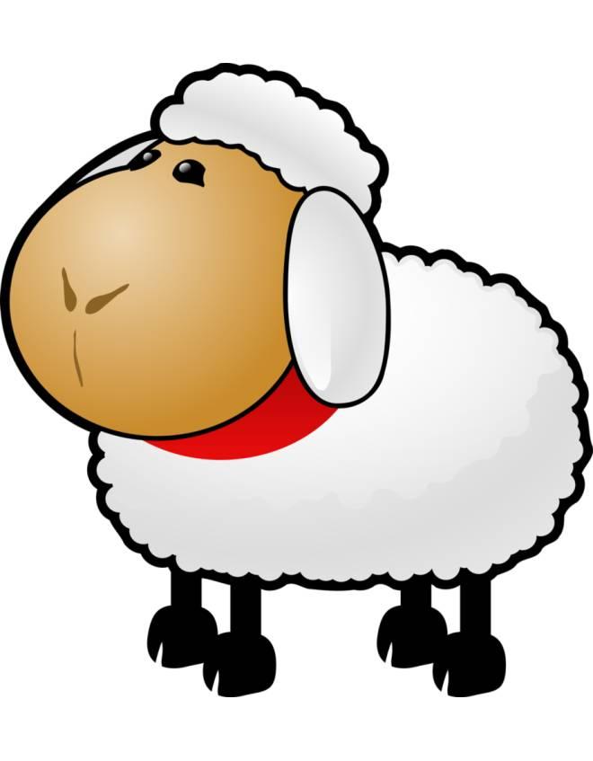 disegno di Pecorella a colori
