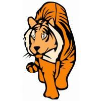 Disegno di Tigre a colori