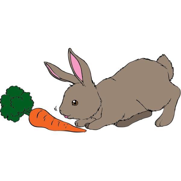 Disegno di il coniglio e la carota a colori per bambini for Coniglio disegno per bambini