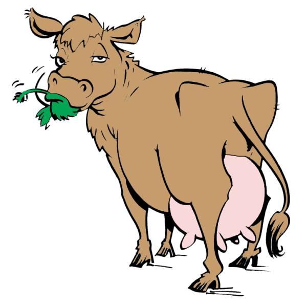 Disegno di mucca a colori per bambini for Disegno della fattoria americana