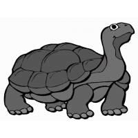 Disegno di La Tartaruga a colori