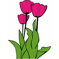 disegno di Fiori Tulipani a colori