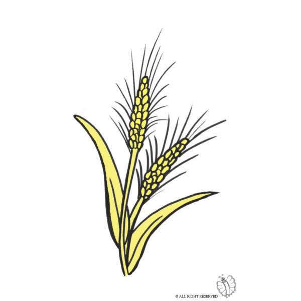 Disegno di grano a colori per bambini - Immagini di tacchini a colori ...