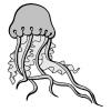 disegno di Medusa a colori