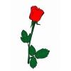 Disegno di La Rosa a colori