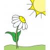 disegno di La Margherita al Sole a colori