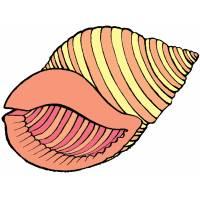 disegno di La Gran Conchiglia a colori
