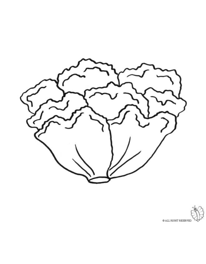 Stampa disegno di insalata da colorare - Colorare le pagine di verdure ...