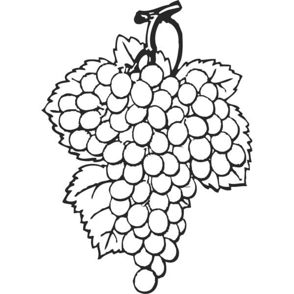Disegno di Grappolo di Uva da colorare