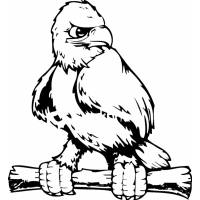 Disegno di Aquila Ammaestrata da colorare