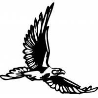Disegno di Aquila in Volo da colorare