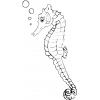 disegno di Cavalluccio di Mare da colorare