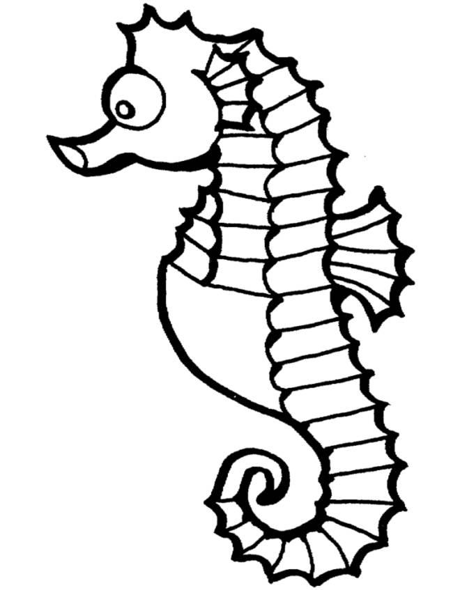 Disegno Di Cavalluccio Marino Da Colorare Per Bambini