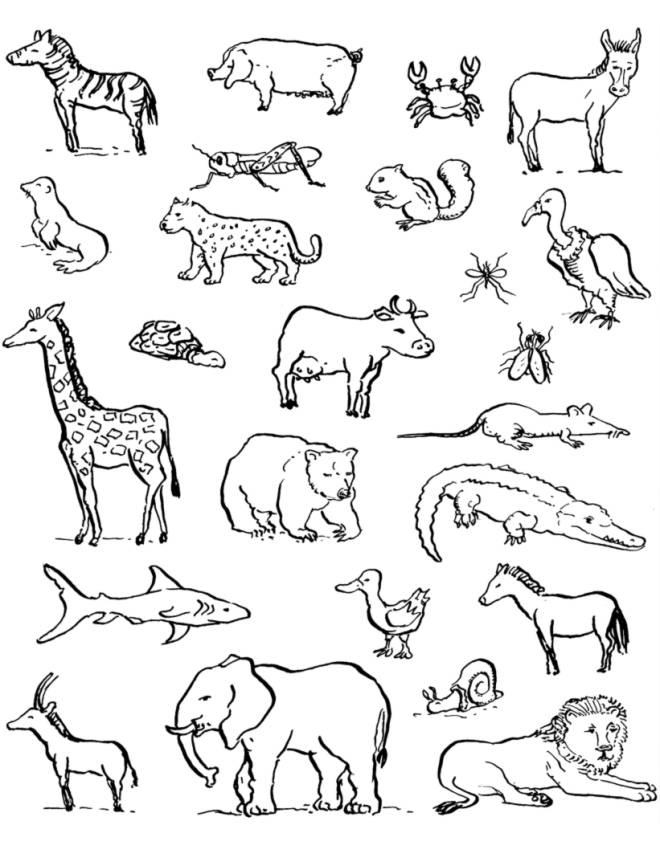 Disegno di animali da colorare per bambini for Mandala da colorare con animali