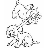 Disegno di Cuccioli di Coker da colorare