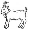 Disegno di capretta a colori per bambini gratis - Immagini da colorare capra ...