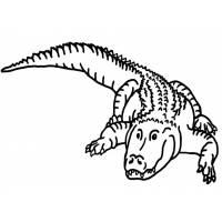 Disegno di Il coccodrillo da colorare