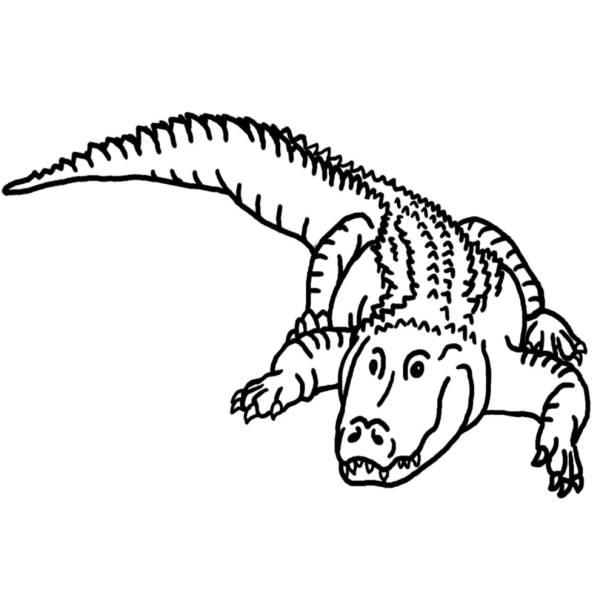 Disegno di il coccodrillo da colorare per bambini for Coccodrillo da colorare