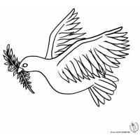 disegno di Colomba Bianca da colorare