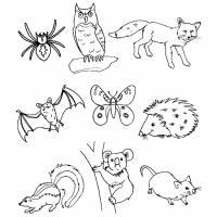 Disegno di Animali del Bosco da colorare