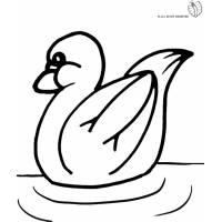 Disegno di Papera sul Lago da colorare