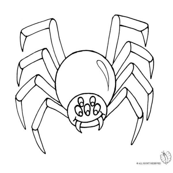 Disegno di ragno per scherzo carnevale da colorare per for Uomo ragno immagini da colorare