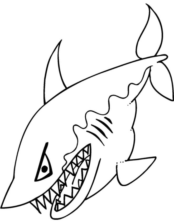 Stampa disegno di lo squalo da colorare for Immagini di pesci da disegnare