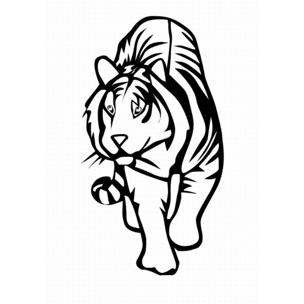 Disegno Di Tigre Da Colorare Per Bambini Disegnidacolorareonlinecom