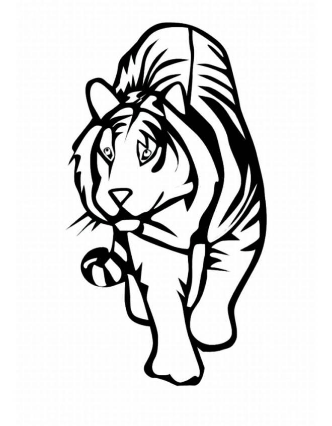 Stampa disegno di tigre da colorare for Disegni di tigri da colorare