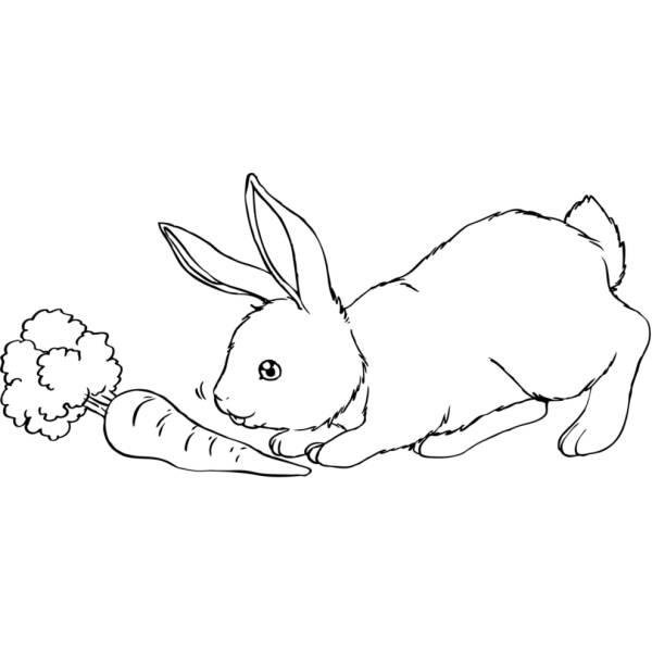 Disegno di Il Coniglio e La Carota da colorare