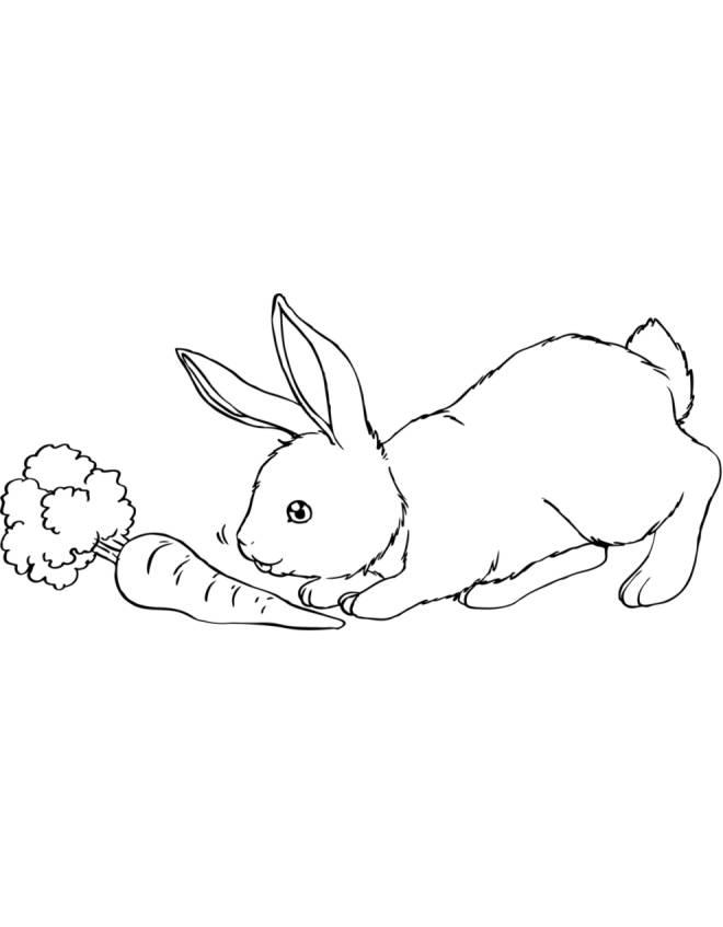 Disegno di il coniglio e la carota da colorare per bambini for Coniglio disegno per bambini