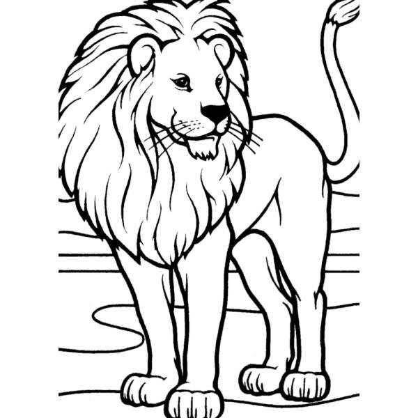Disegno di leone da colorare per bambini for Disegni da colorare animali della foresta