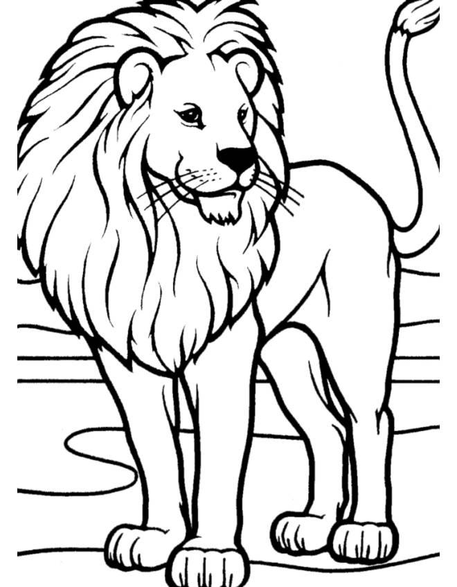 Stampa disegno di leone da colorare for Immagini animali da colorare