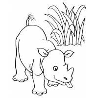 Disegno di Rinoceronte da colorare