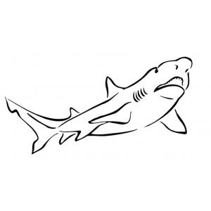 Disegno di lo squalo da colorare per bambini gratis www for Squalo da colorare per bambini