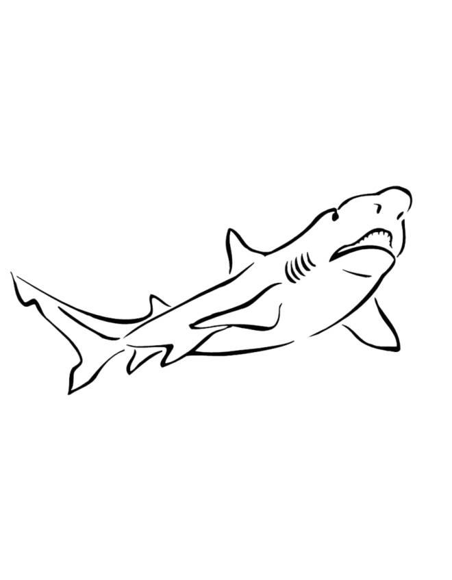 Disegno di squalo da colorare per bambini for Disegno squalo