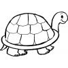Disegno di Tartaruga da colorare
