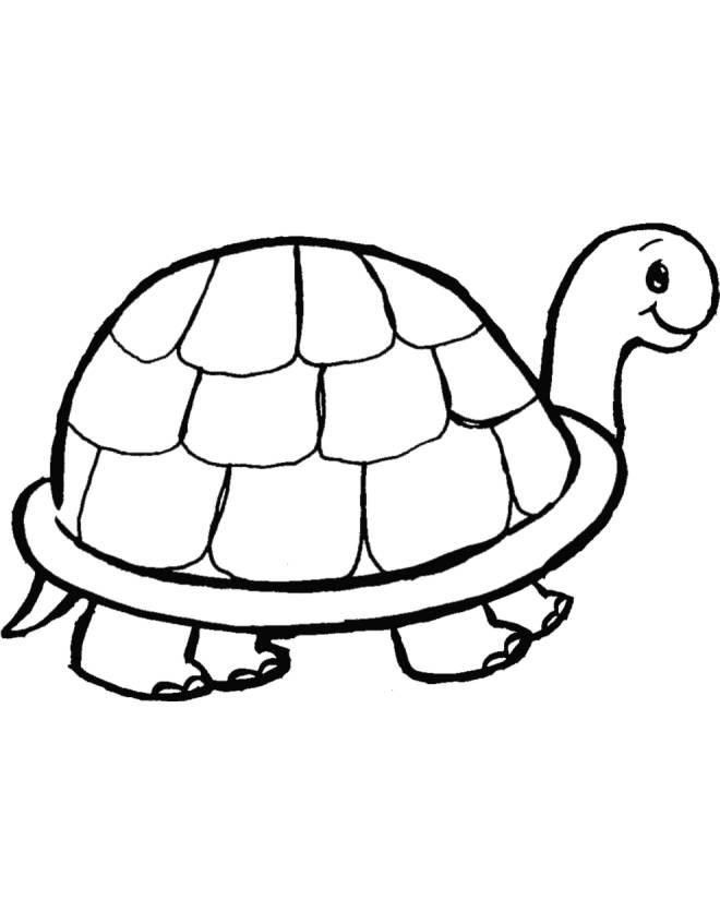disegno di tartaruga da colorare per bambini