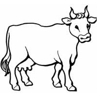 Disegno di Toro da colorare