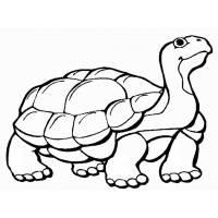 Disegno di La Tartaruga da colorare