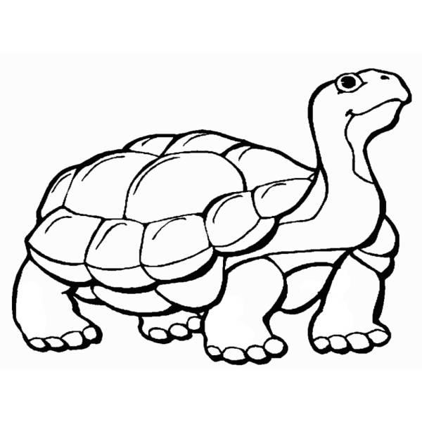 Disegno Di La Tartaruga Da Colorare Per Bambini