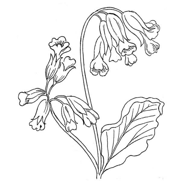 Disegno di fiori campanelle da colorare per bambini for Design del mazzo online