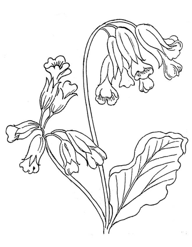 Disegno di fiori campanelle da colorare per bambini for Disegno vaso da colorare