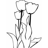 disegno di Fiori Tulipani da colorare
