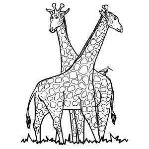 Disegno di le giraffe da colorare per bambini gratis - Zoo animali da colorare ...