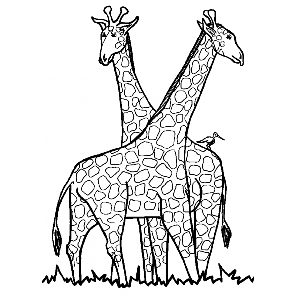 disegno di le giraffe da colorare per bambini