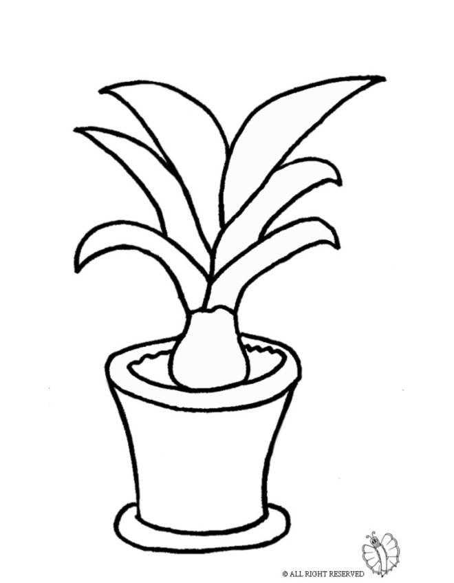 Disegno di Pianta nel Vaso da colorare per bambini ...