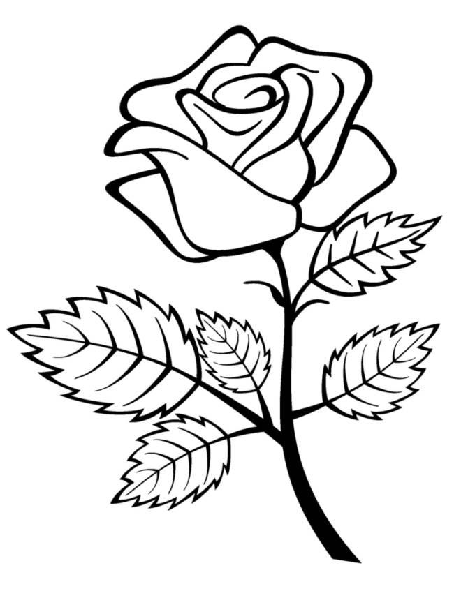 Stampa disegno di rosa da colorare for Fiori da disegnare facili
